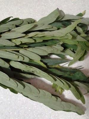 Kathurumurunga Kola /Agati Leaves