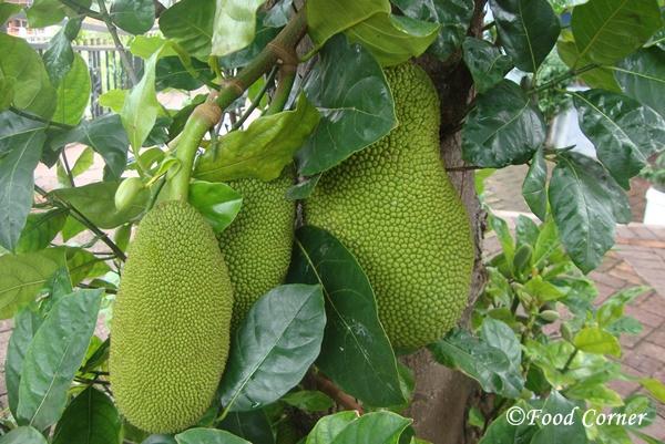 Baby Jackfruit-Polos