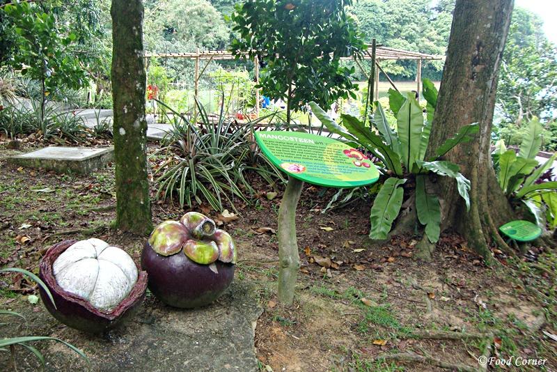 Tropical-Crops-Singapore-Zoo-2