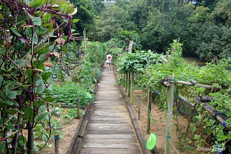 Tropical-Crops-Singapore-Zoo-5