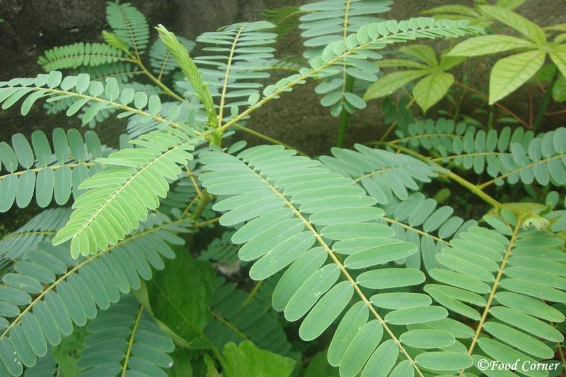 Kathurumurunga-leaves-salad