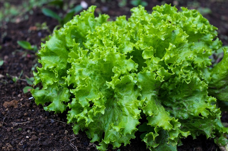6 Tasty and Easy to Grow Vegetables Perfect for New Growers
