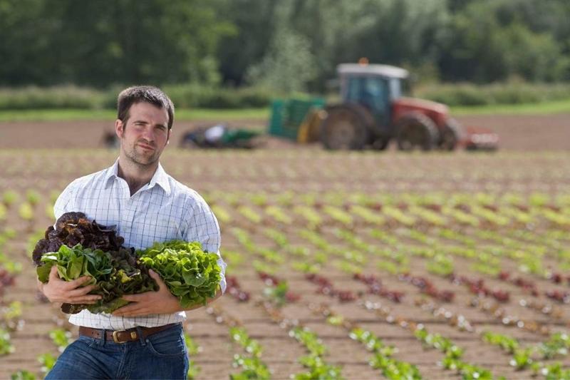 How To Harvest Leaf Lettuce